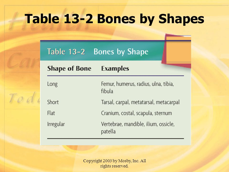 Copyright 2003 by Mosby, Inc. All rights reserved. Table 13-2 Bones by Shapes