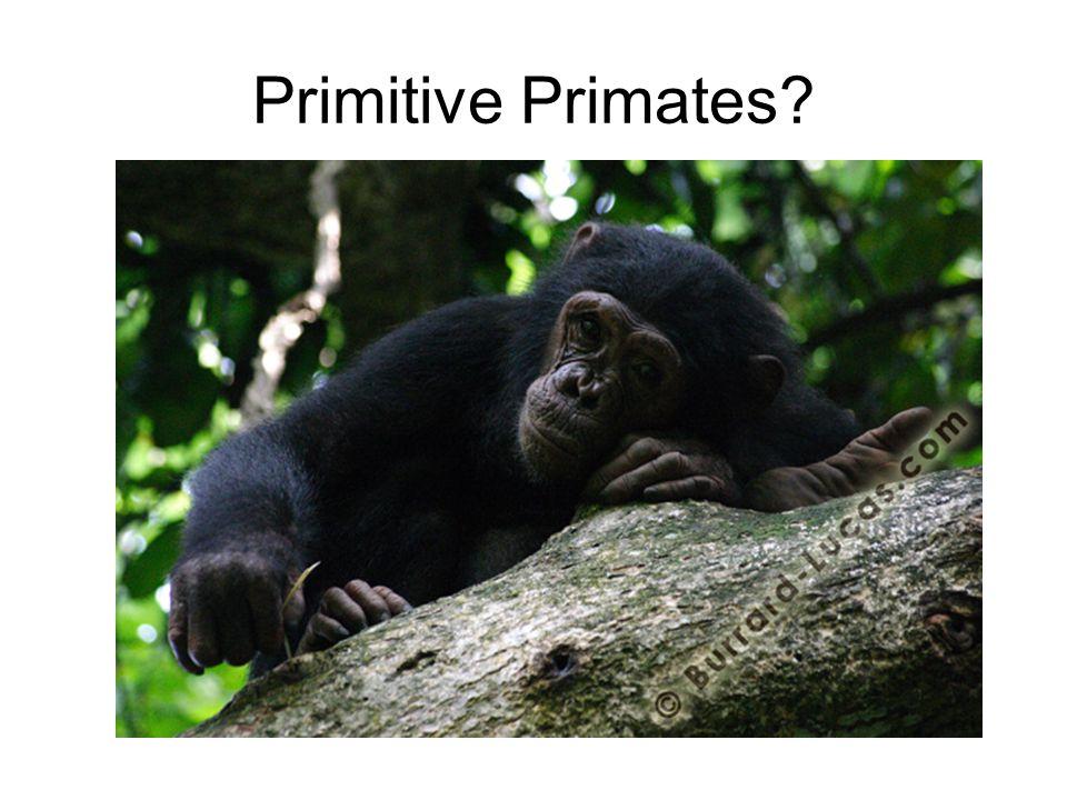 Primitive Primates