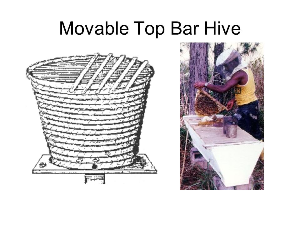 Movable Top Bar Hive
