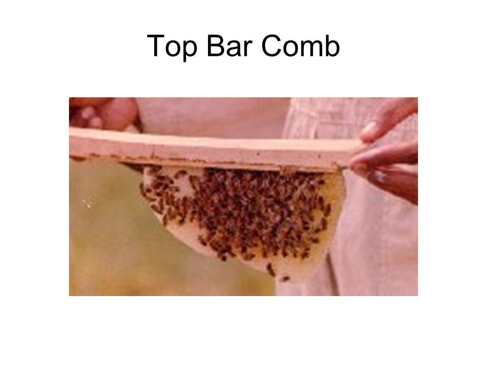Top Bar Comb