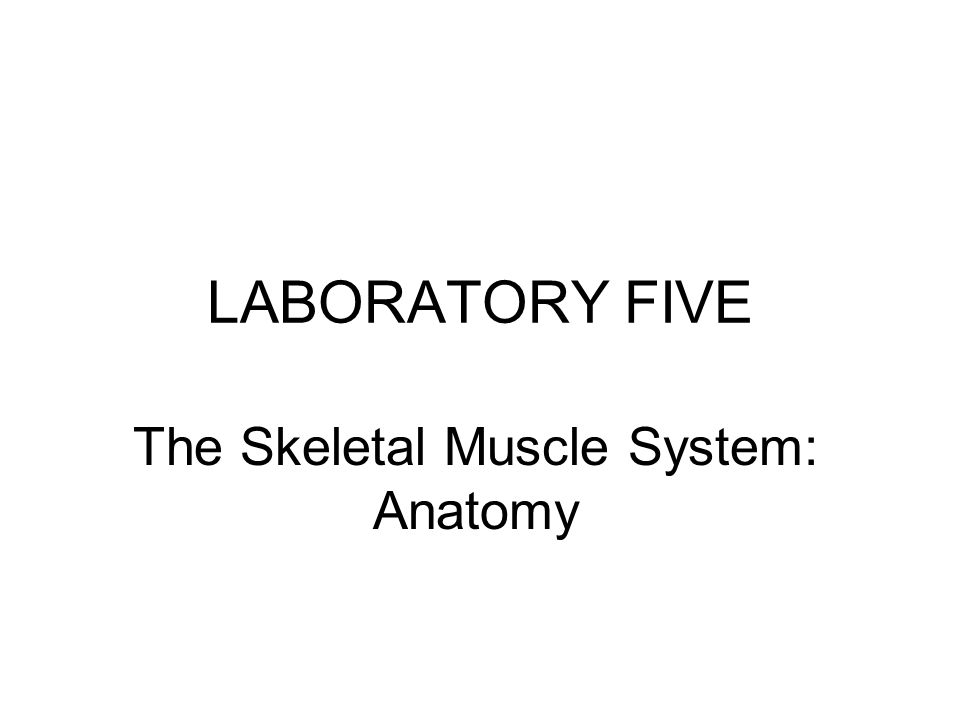 LABORATORY FIVE The Skeletal Muscle System: Anatomy