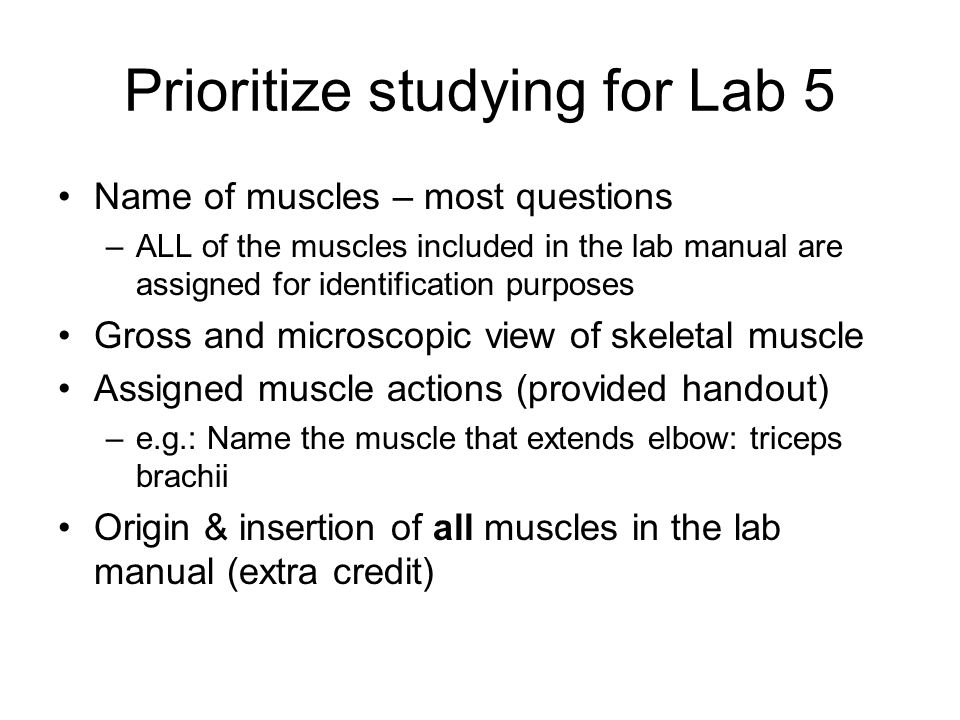 Prioritize studying for Lab 5 Name of muscles – most questions –ALL of the muscles included in the lab manual are assigned for identification purposes Gross and microscopic view of skeletal muscle Assigned muscle actions (provided handout) –e.g.: Name the muscle that extends elbow: triceps brachii Origin & insertion of all muscles in the lab manual (extra credit)