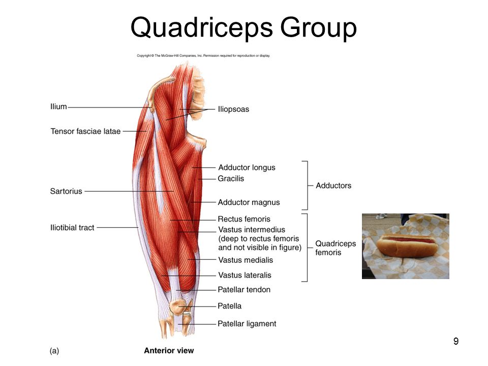 Quadriceps Group 9