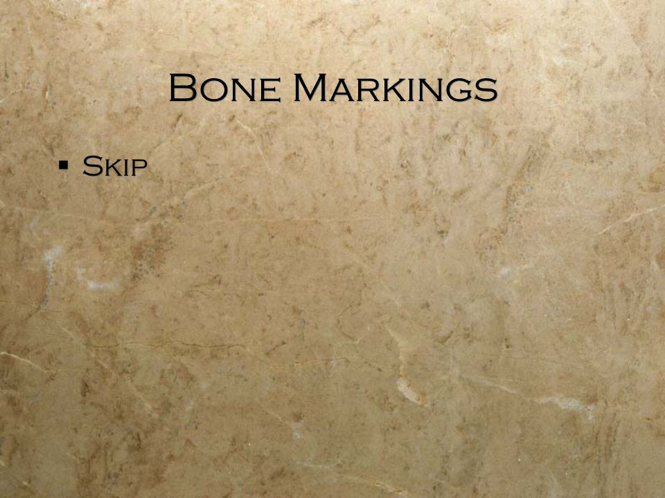 Bone Markings  Skip
