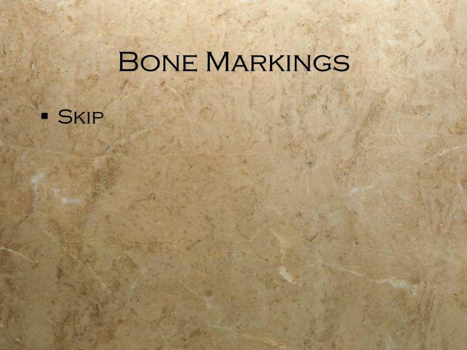 Bone Markings  Skip