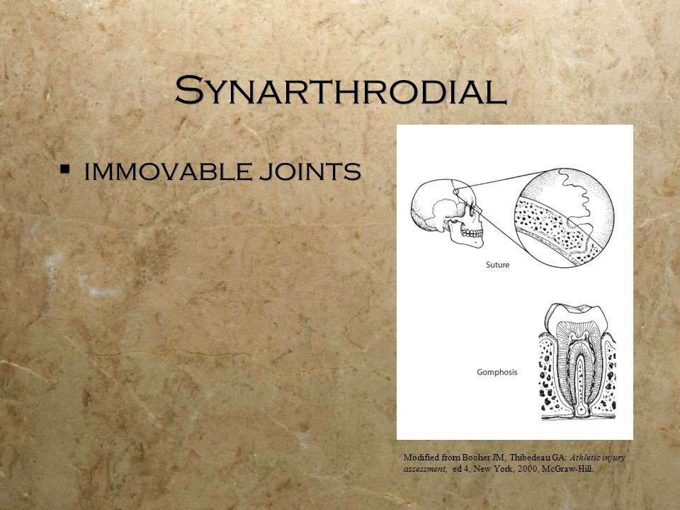 Synarthrodial  immovable joints Modified from Booher JM, Thibedeau GA: Athletic injury assessment, ed 4, New York, 2000, McGraw-Hill.