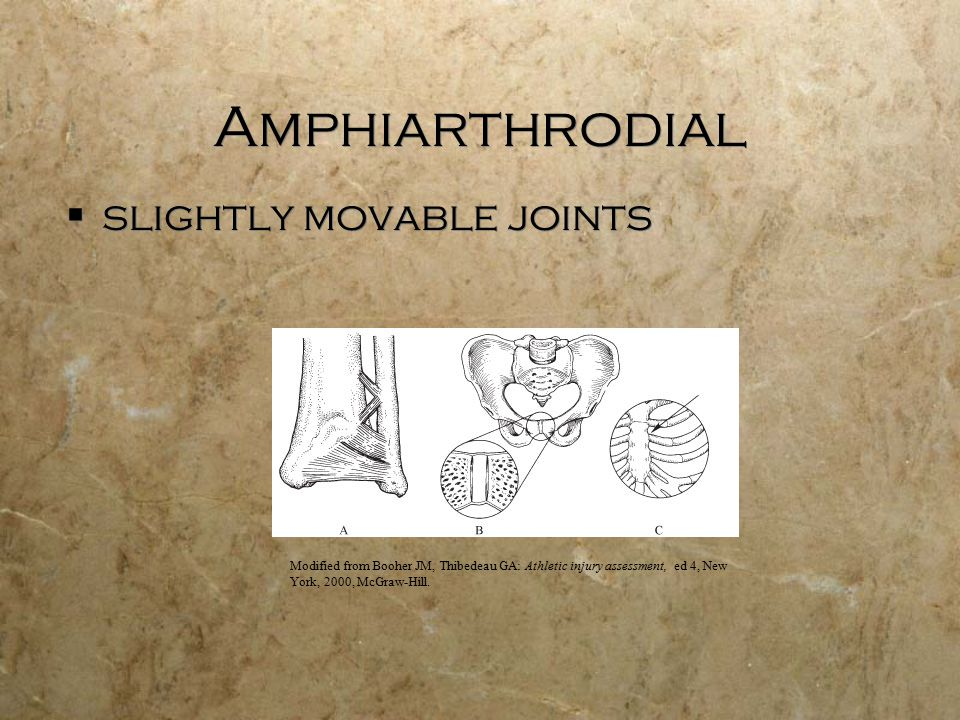 Amphiarthrodial  slightly movable joints Modified from Booher JM, Thibedeau GA: Athletic injury assessment, ed 4, New York, 2000, McGraw-Hill.