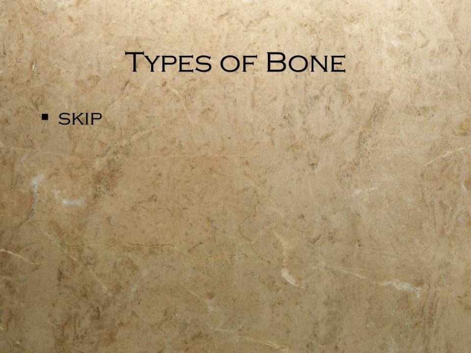 Types of Bone  skip