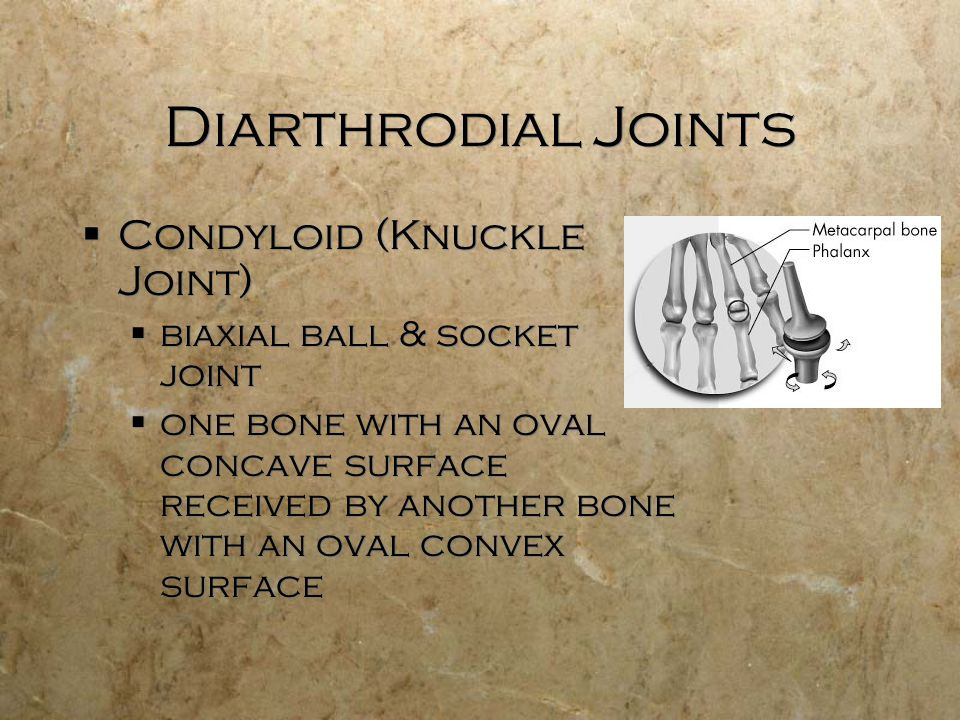 Diarthrodial Joints  Condyloid (Knuckle Joint)  biaxial ball & socket joint  one bone with an oval concave surface received by another bone with an