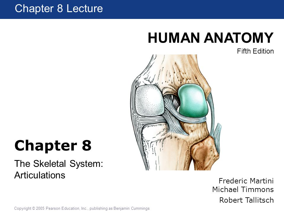 HUMAN ANATOMY Fifth Edition Chapter 1 Lecture Copyright © 2005 Pearson Education, Inc., publishing as Benjamin Cummings Chapter 8 The Skeletal System:
