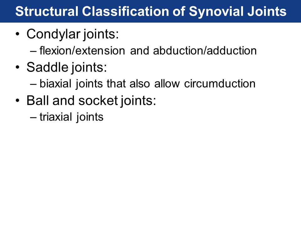 Structural Classification of Synovial Joints Condylar joints: –flexion/extension and abduction/adduction Saddle joints: –biaxial joints that also allo