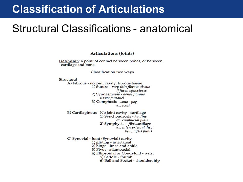 Classification of Articulations Structural Classifications - anatomical