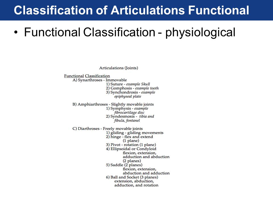 Classification of Articulations Functional Functional Classification - physiological