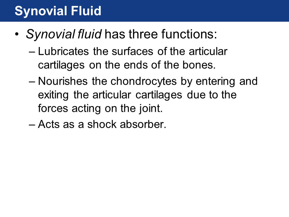 Synovial Fluid Synovial fluid has three functions: –Lubricates the surfaces of the articular cartilages on the ends of the bones. –Nourishes the chond