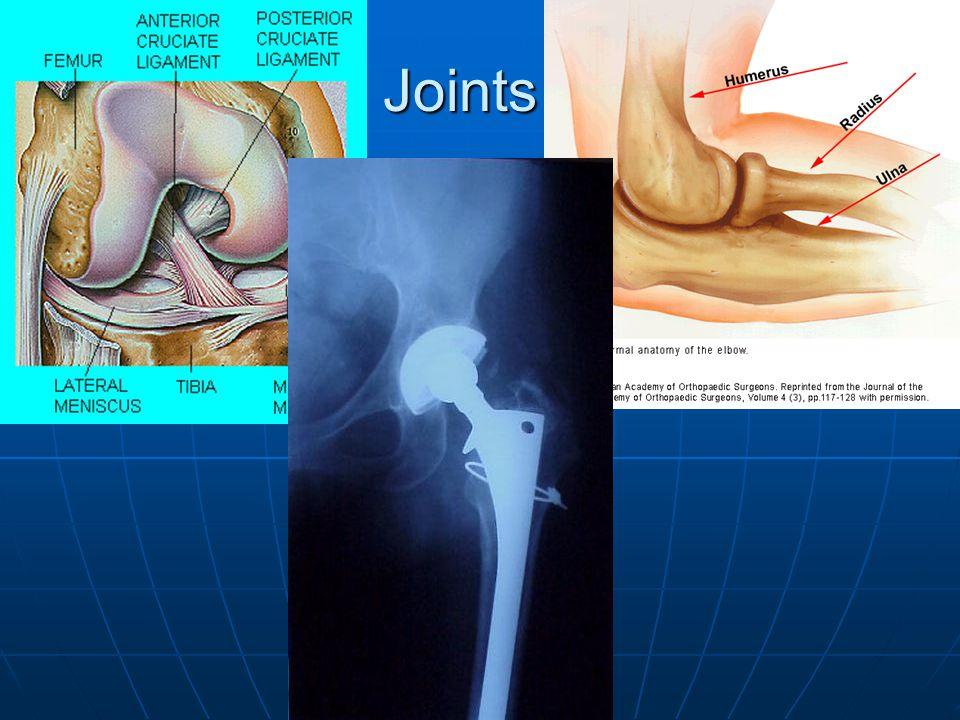 Appendicular skeleton (cont.) Pelvic Girdle:Pelvic Girdle: Made up of two Coxal bones Made up of two Coxal bones Supports Hind limbs (legs) Supports Hind limbs (legs) FemurFemur Tibia & FibulaTibia & Fibula PatellaPatella TarsalsTarsals MetatarsalsMetatarsals PhalangesPhalanges