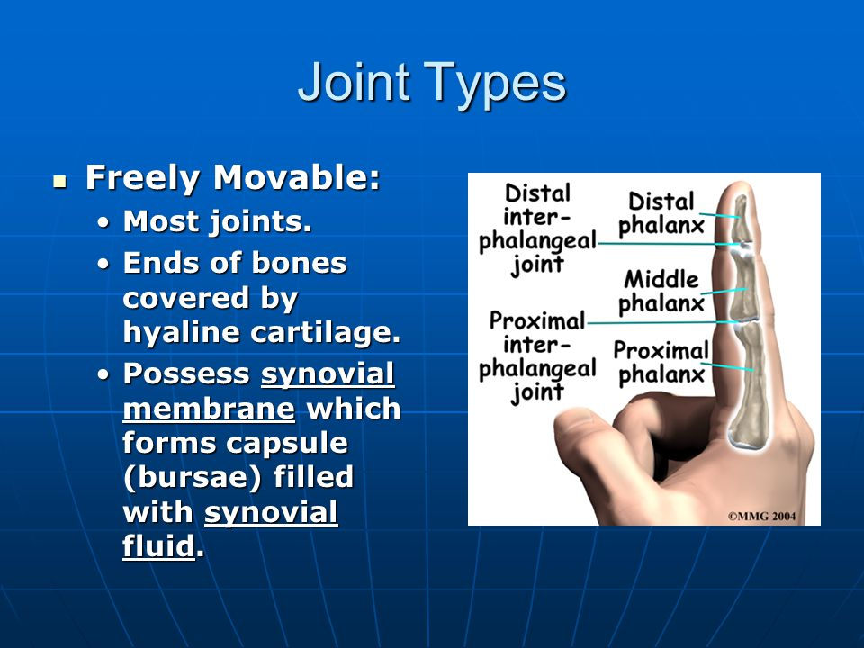 Joint types Slightly movable: Slightly movable: limited movement (bending or twisting only).limited movement (bending or twisting only).