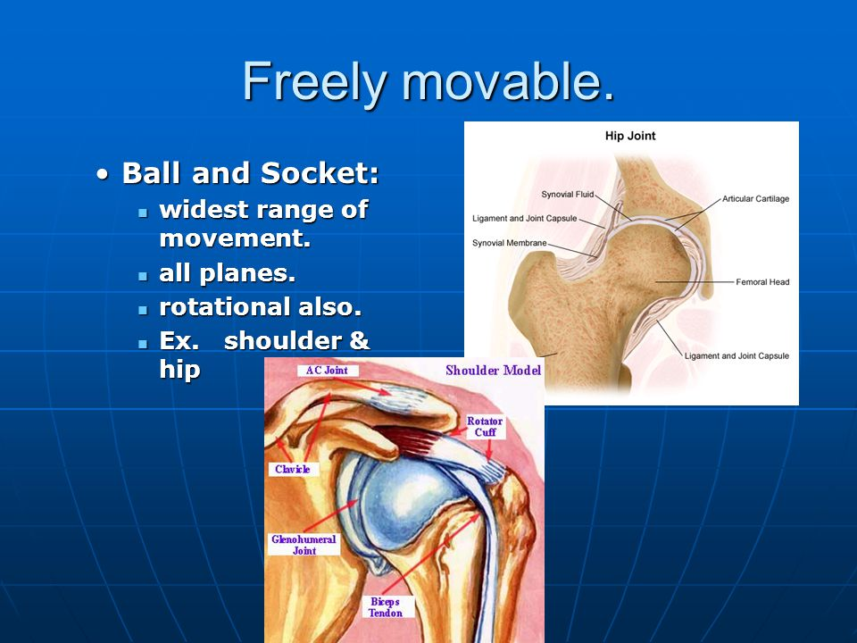Joint Types Freely Movable: Freely Movable: Most joints.Most joints.
