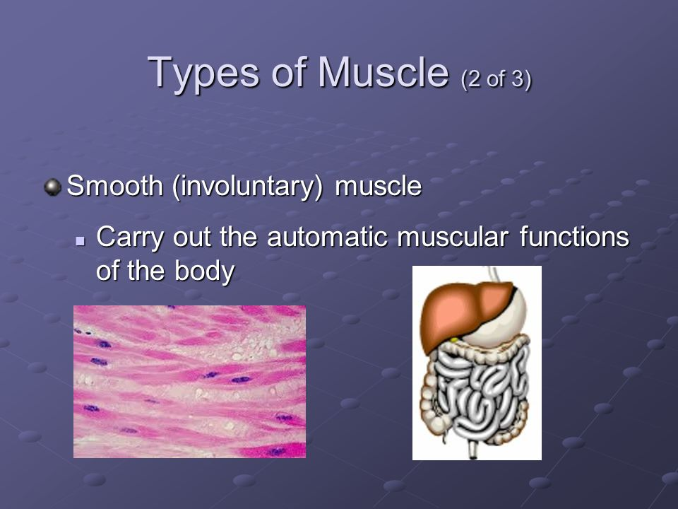 Types of Muscle (2 of 3) Smooth (involuntary) muscle Carry out the automatic muscular functions of the body Carry out the automatic muscular functions of the body