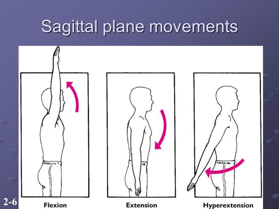 2-6 Sagittal plane movements
