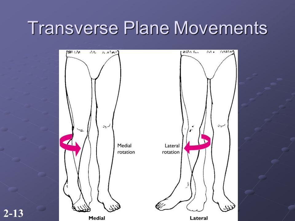 2-13 Transverse Plane Movements