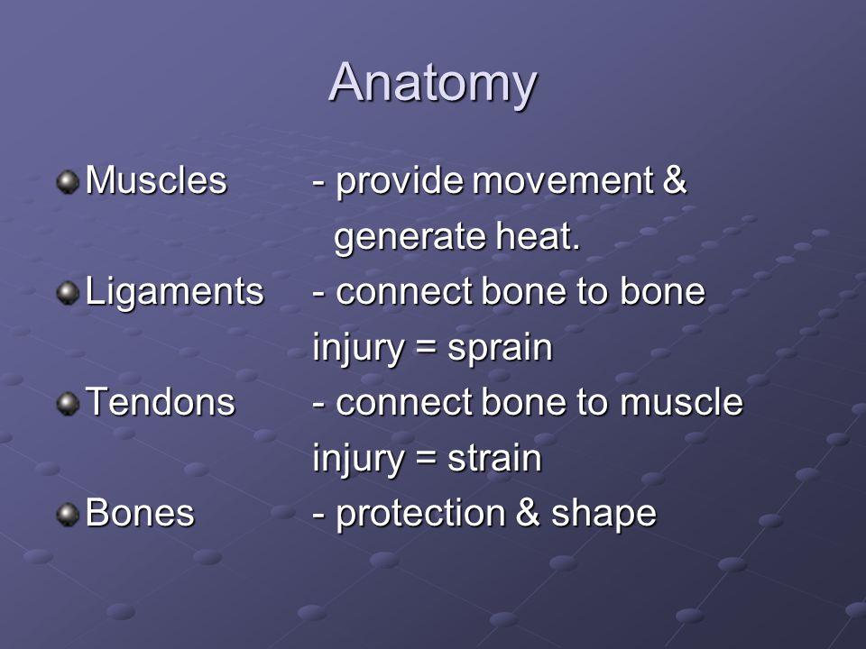 Anatomy Muscles- provide movement & generate heat.