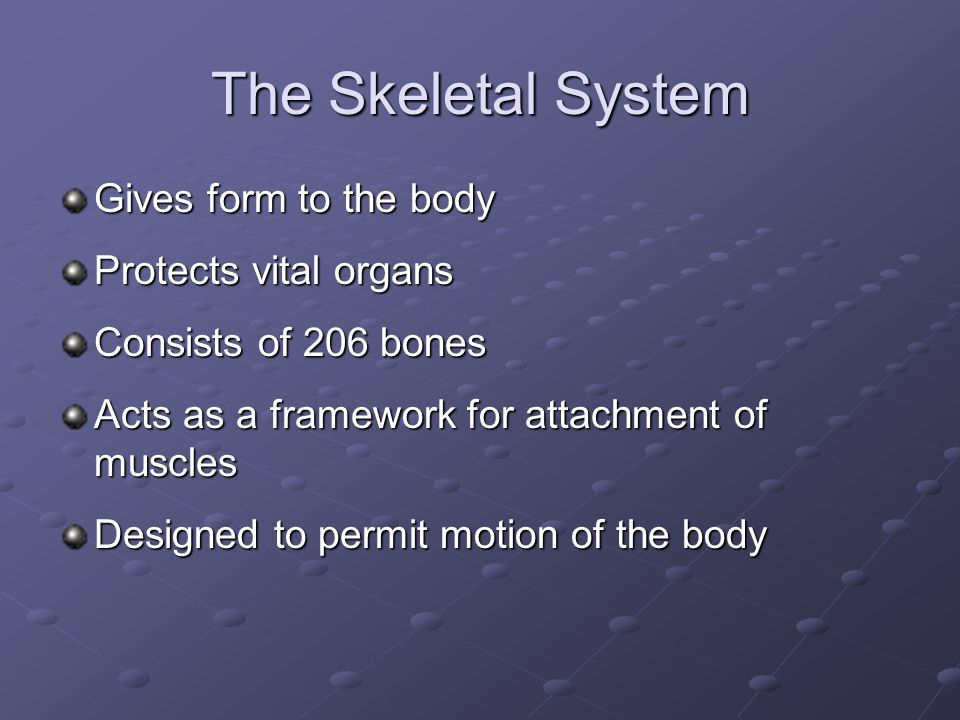 The Skeletal System Gives form to the body Protects vital organs Consists of 206 bones Acts as a framework for attachment of muscles Designed to permit motion of the body