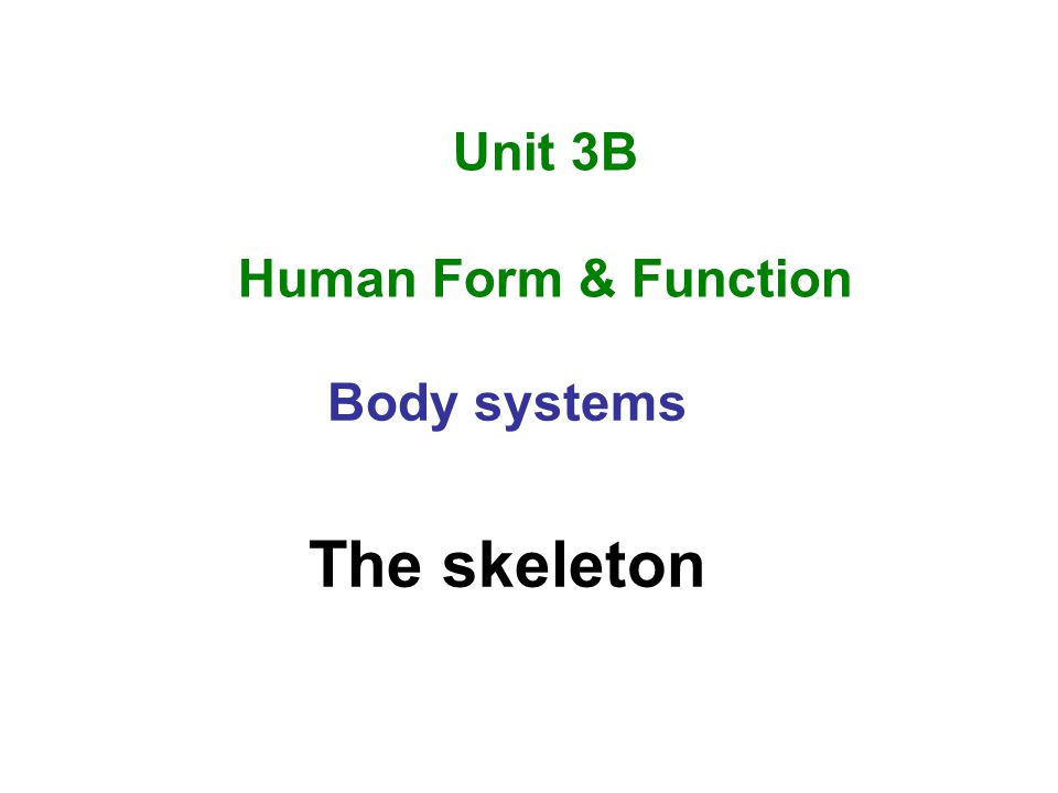 Unit 3B Human Form & Function Body systems The skeleton
