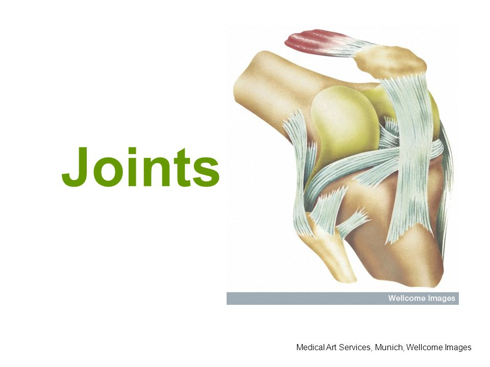Medical Art Services, Munich, Wellcome Images Joints