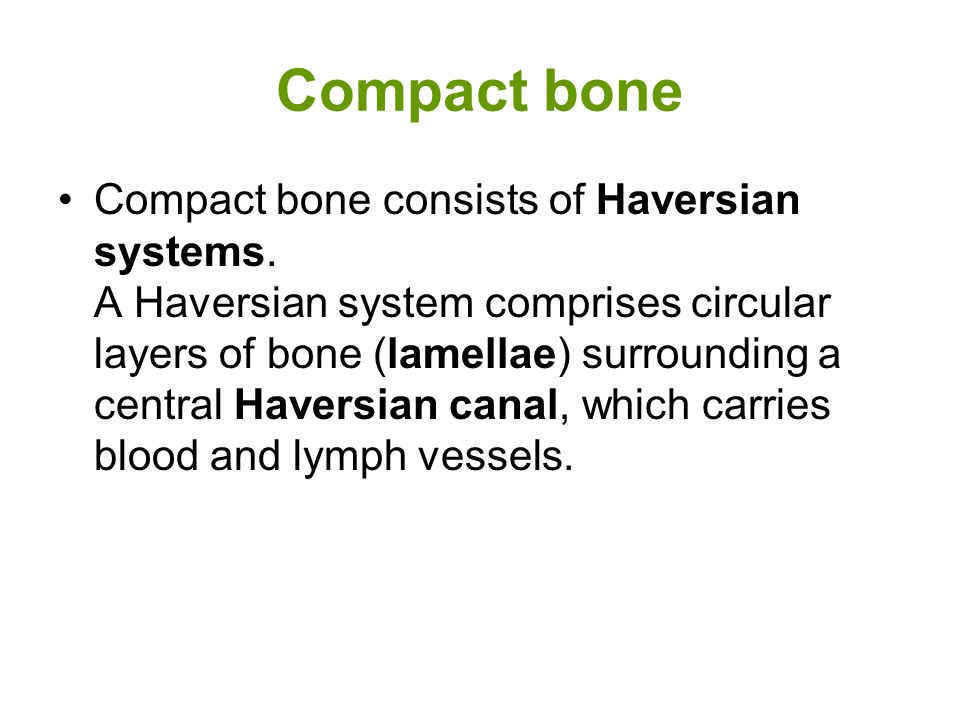 Compact bone Compact bone consists of Haversian systems.