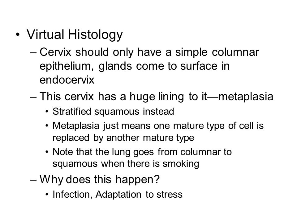 Virtual Histology –Cervix should only have a simple columnar epithelium, glands come to surface in endocervix –This cervix has a huge lining to it—met