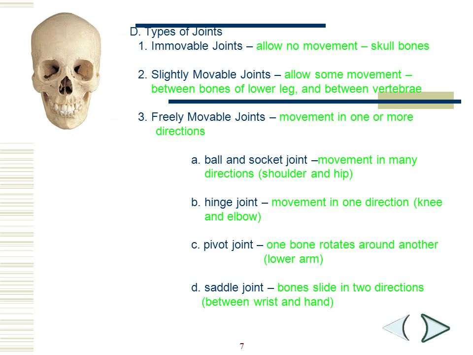 7 Section 36-1 D. Types of Joints 1. Immovable Joints – allow no movement – skull bones 2. Slightly Movable Joints – allow some movement – between bon