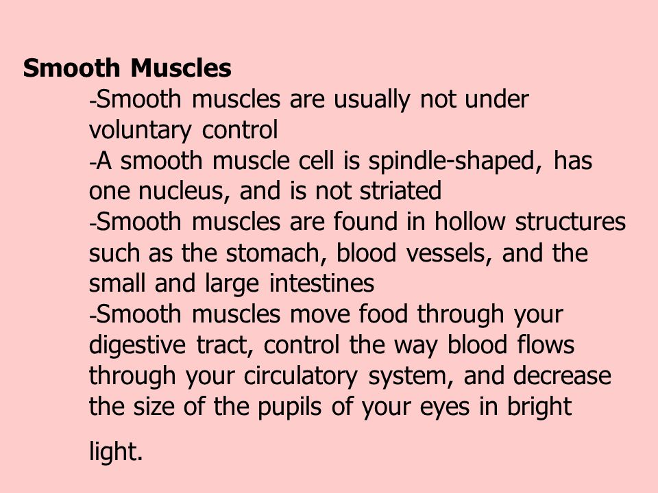 Smooth Muscles - Smooth muscles are usually not under voluntary control - A smooth muscle cell is spindle-shaped, has one nucleus, and is not striated