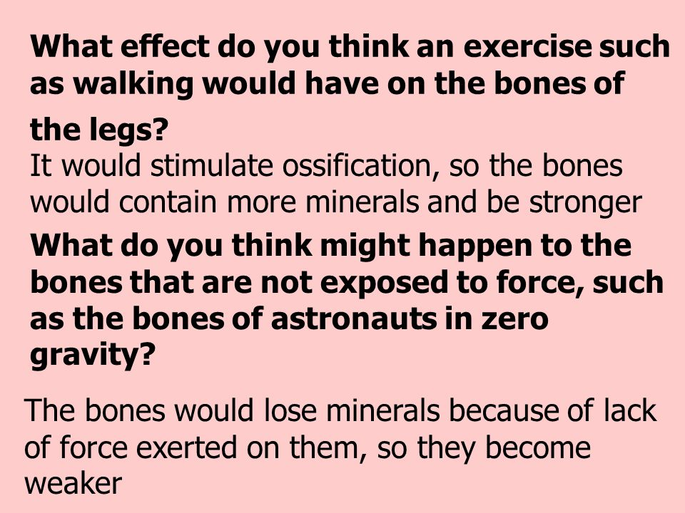 What effect do you think an exercise such as walking would have on the bones of the legs? It would stimulate ossification, so the bones would contain