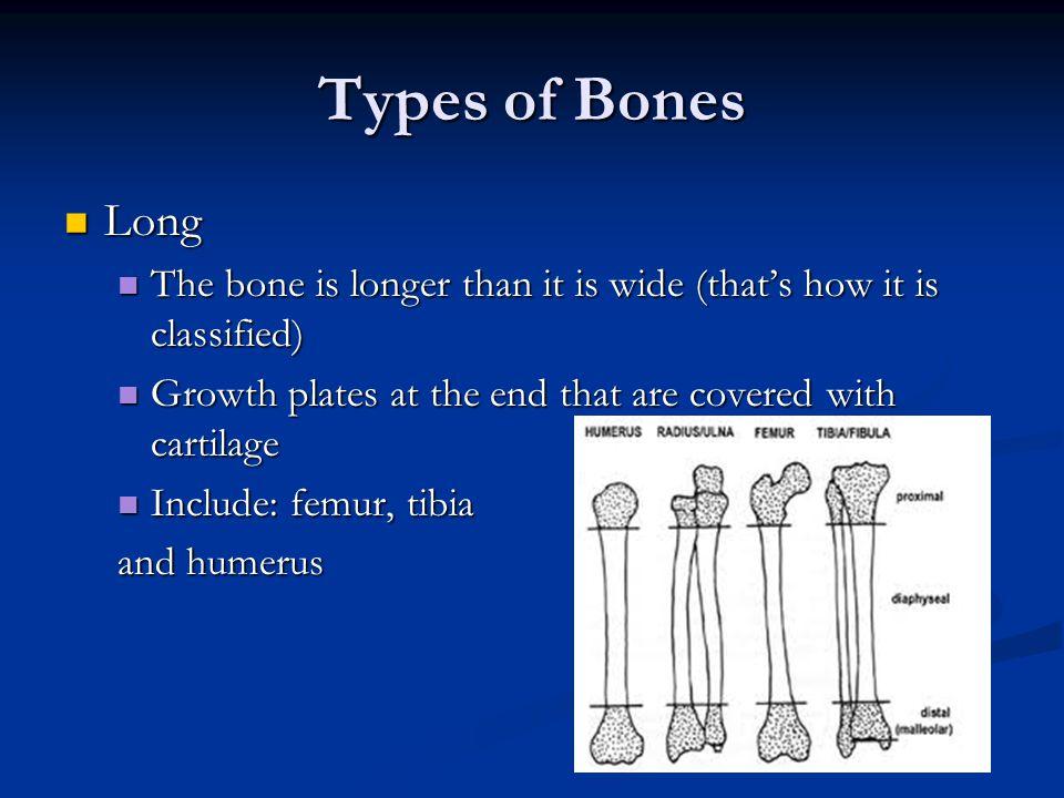 Types of Bones Long Long The bone is longer than it is wide (that's how it is classified) The bone is longer than it is wide (that's how it is classif
