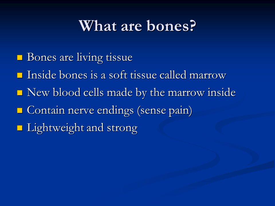 What are bones? Bones are living tissue Bones are living tissue Inside bones is a soft tissue called marrow Inside bones is a soft tissue called marro