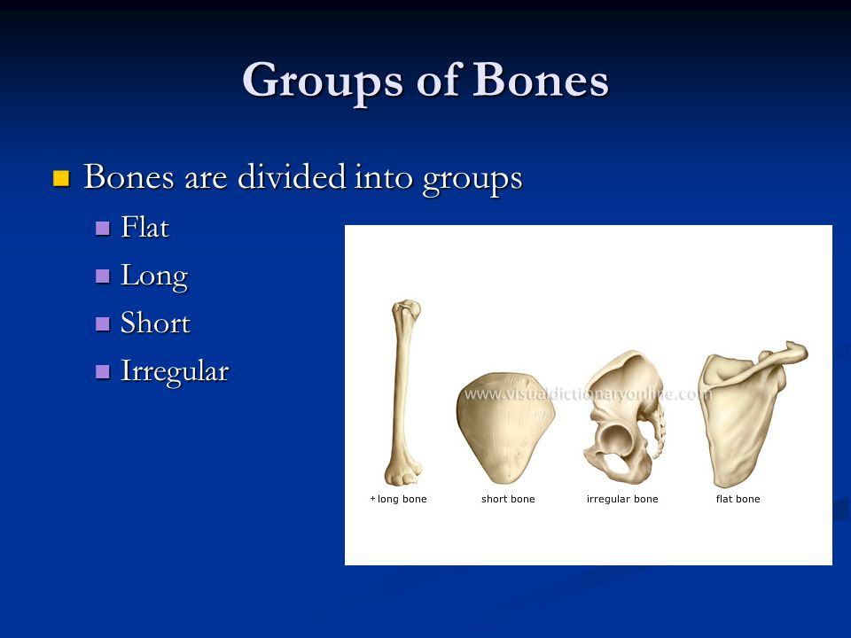 Groups of Bones Flat Flat The purpose of flat bones is to protect important organs and to provide a flat surface muscle attachment.