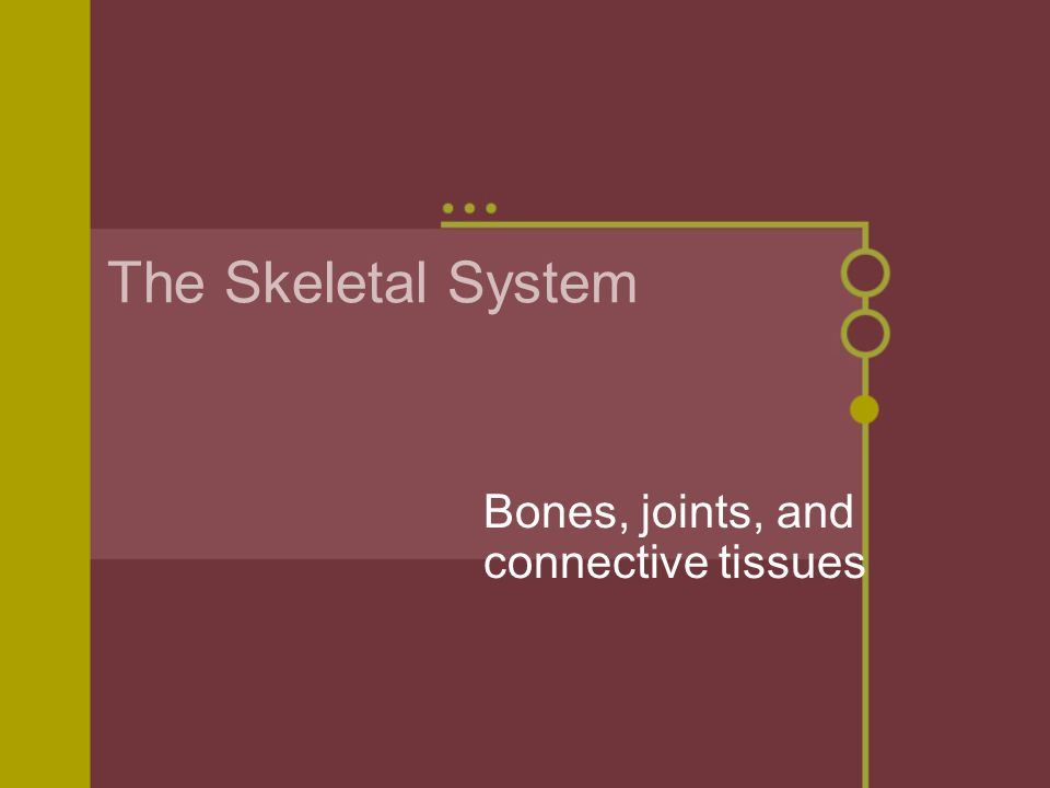 The Skeletal System Bones, joints, and connective tissues