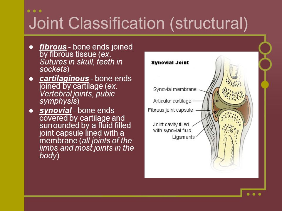 Joint Classification (structural) fibrous - bone ends joined by fibrous tissue (ex.
