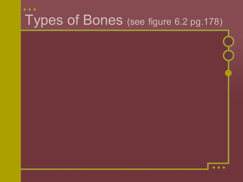 Types of Bones (see figure 6.2 pg.178)