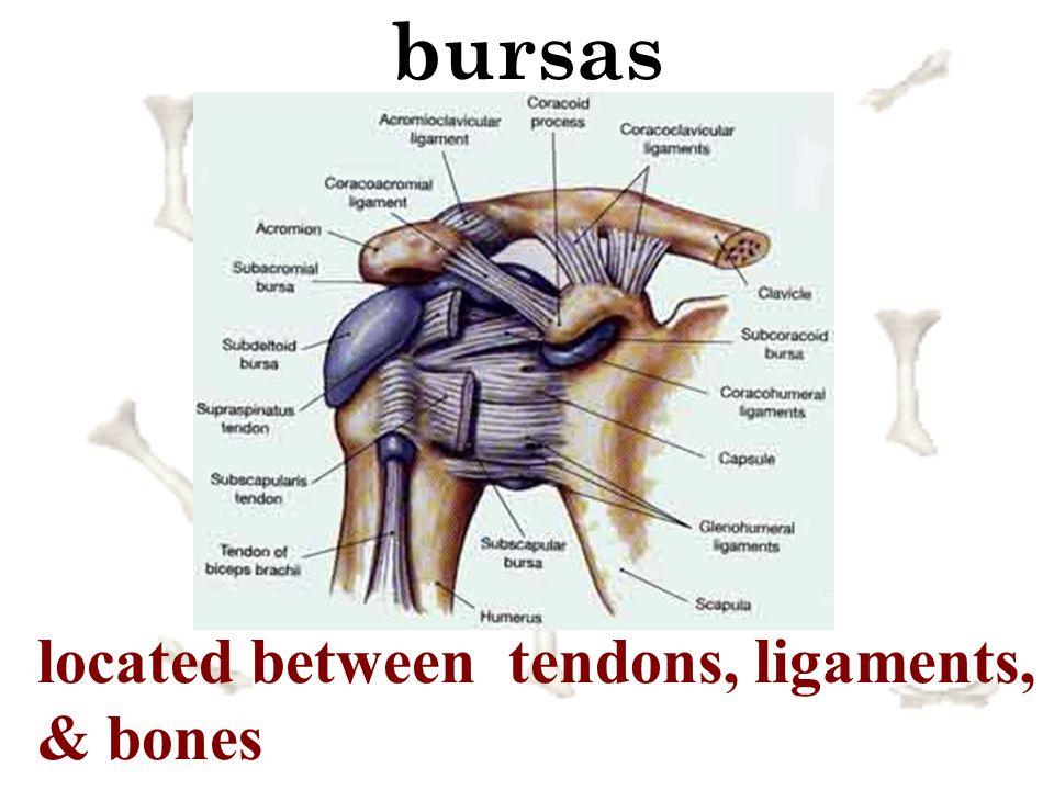 bursas located between tendons, ligaments, & bones