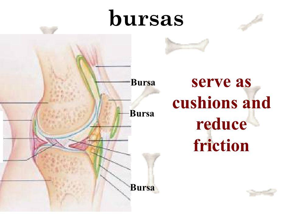 bursas Bursa serve as cushions and reduce friction