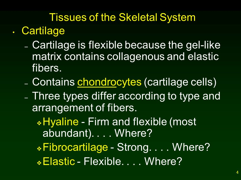 4 Tissues of the Skeletal System Cartilage – Cartilage is flexible because the gel-like matrix contains collagenous and elastic fibers.