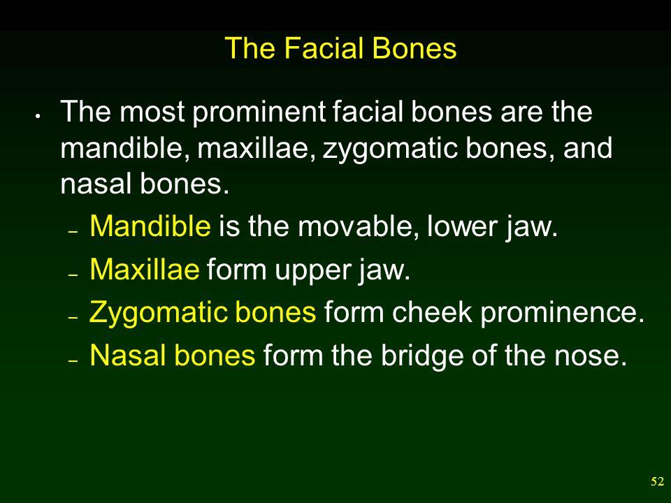 51 Bones of the Skull
