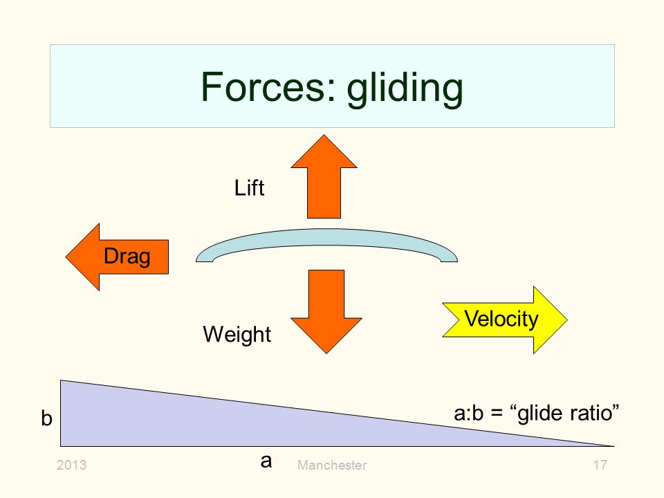 """Forces: gliding 2013Manchester17 Drag Velocity Lift Weight a b a:b = """"glide ratio"""""""