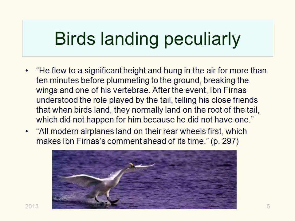 """Birds landing peculiarly """"He flew to a significant height and hung in the air for more than ten minutes before plummeting to the ground, breaking the"""