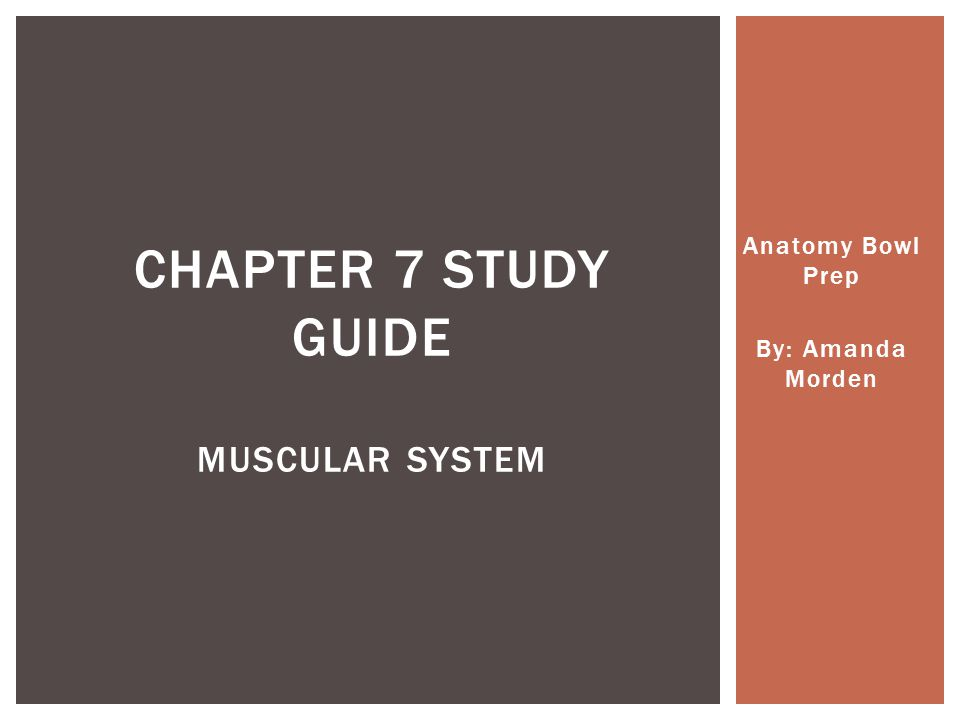 Anatomy Bowl Prep By: Amanda Morden CHAPTER 7 STUDY GUIDE MUSCULAR SYSTEM