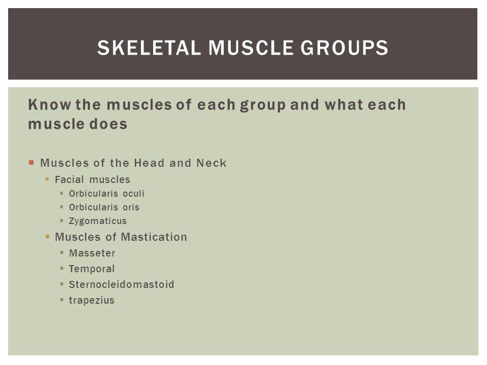 Know the muscles of each group and what each muscle does  Muscles of the Head and Neck  Facial muscles  Orbicularis oculi  Orbicularis oris  Zygomaticus  Muscles of Mastication  Masseter  Temporal  Sternocleidomastoid  trapezius SKELETAL MUSCLE GROUPS