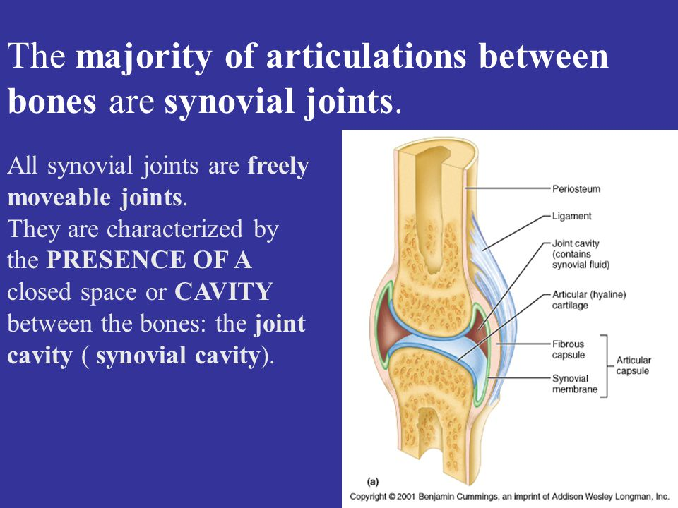All synovial joints are freely moveable joints.