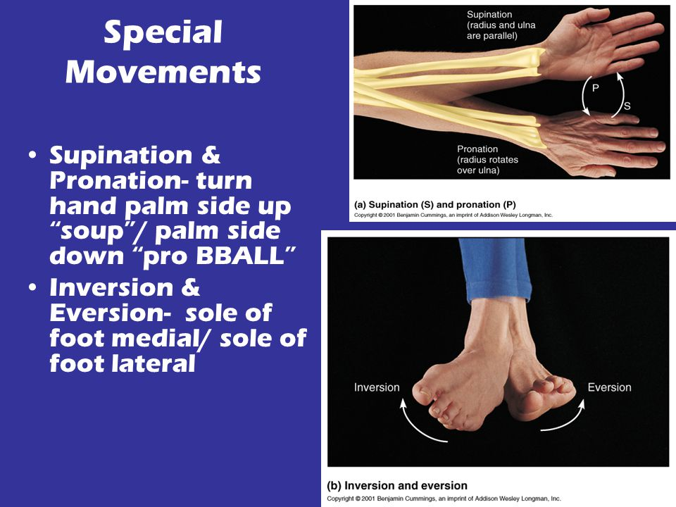 Special Movements Supination & Pronation- turn hand palm side up soup / palm side down pro BBALL Inversion & Eversion- sole of foot medial/ sole of foot lateral