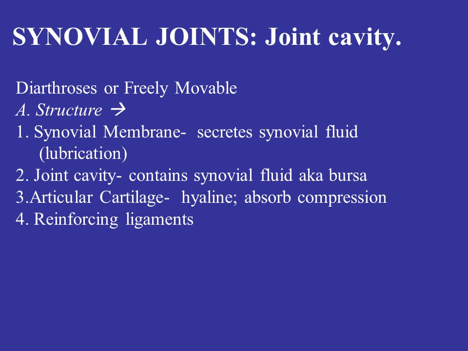 SYNOVIAL JOINTS: Joint cavity. Diarthroses or Freely Movable A.